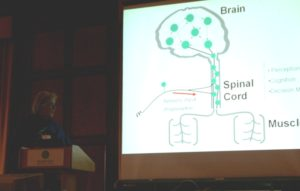 Speaker Reggie presents a powerpoint slide showing a figure of the Brain, Spinal Cord, and Muscles.